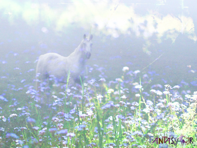 Misty Unicorn Desktop Wallpaper