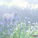 misty unicorn wallpaper 800 150x150 Free Unicorn Desktop Wallpapers