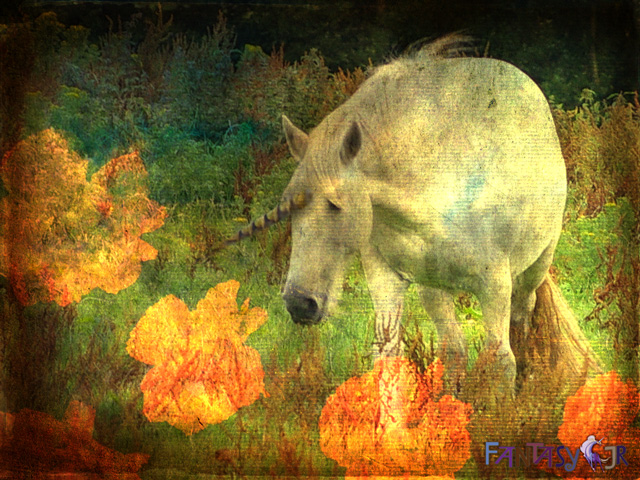 unicorn wallpaper 640 Free Unicorn Desktop Wallpapers