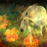 unicorn wallpaper 800 150x150 Free Unicorn Desktop Wallpapers