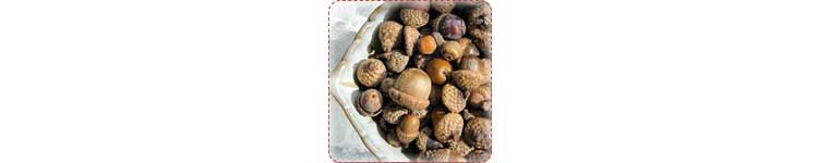 acorn hunting activity 101+ Kids Outdoor Activities, Crafts, Games, and Ideas for Winter, Spring, Summer & Fall