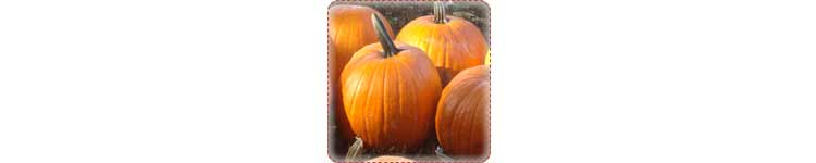 pumpkin patch activity 101+ Kids Outdoor Activities, Crafts, Games, and Ideas for Winter, Spring, Summer & Fall